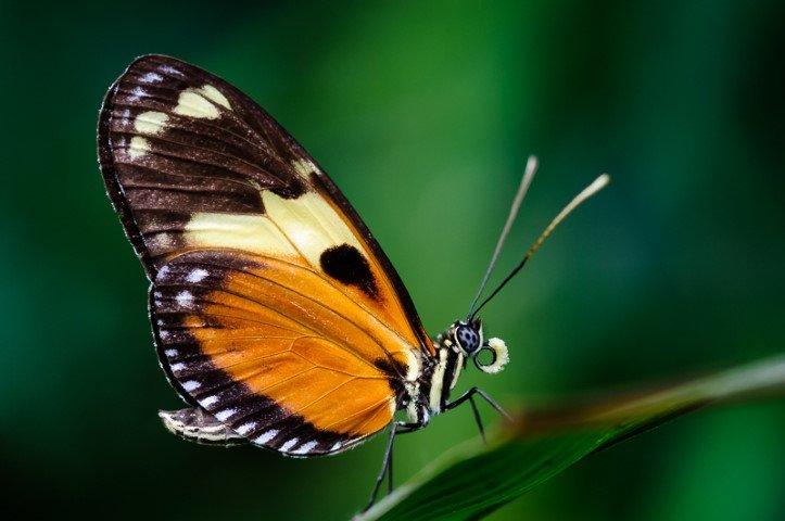 Schmetterlingshaus