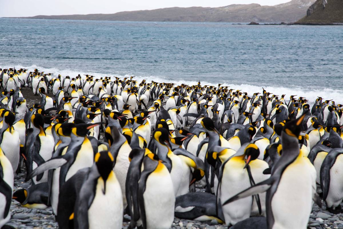 Pinguine Argentinien