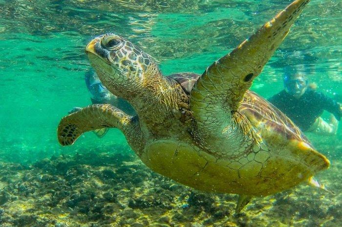 Apo Island: Tipps, Übernachtung und Anreise