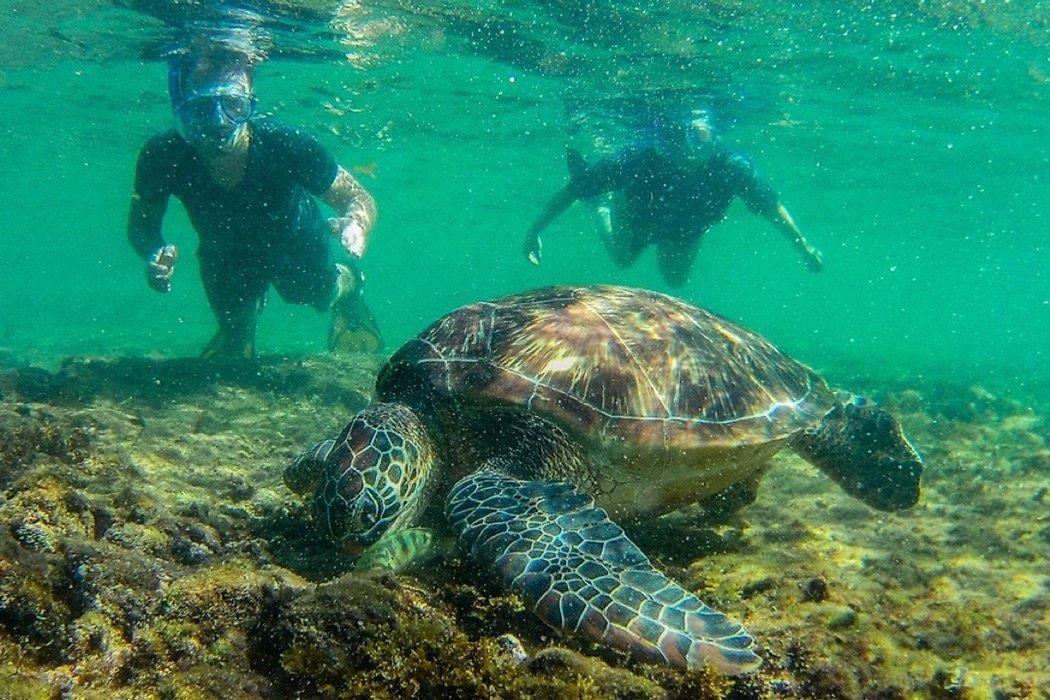 Apo Island Schildkröten