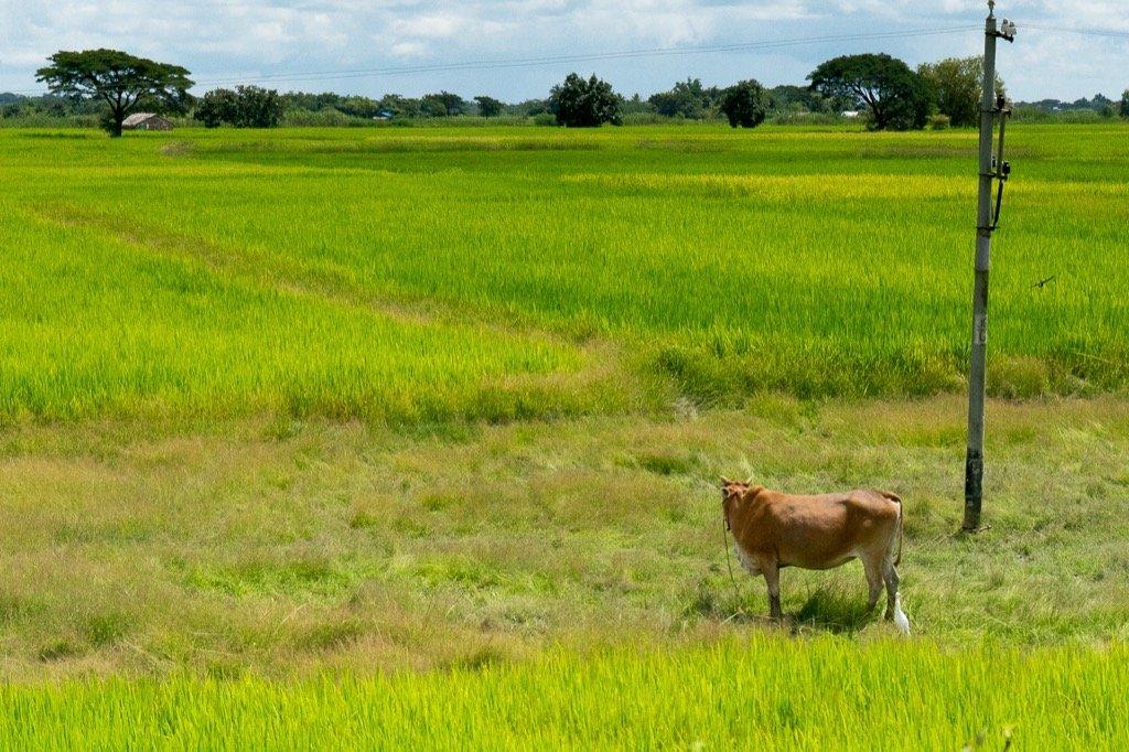 Zugfahrt Yangon Bago