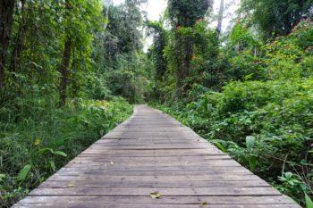 Botanischer Garten in Pyin U Lwin