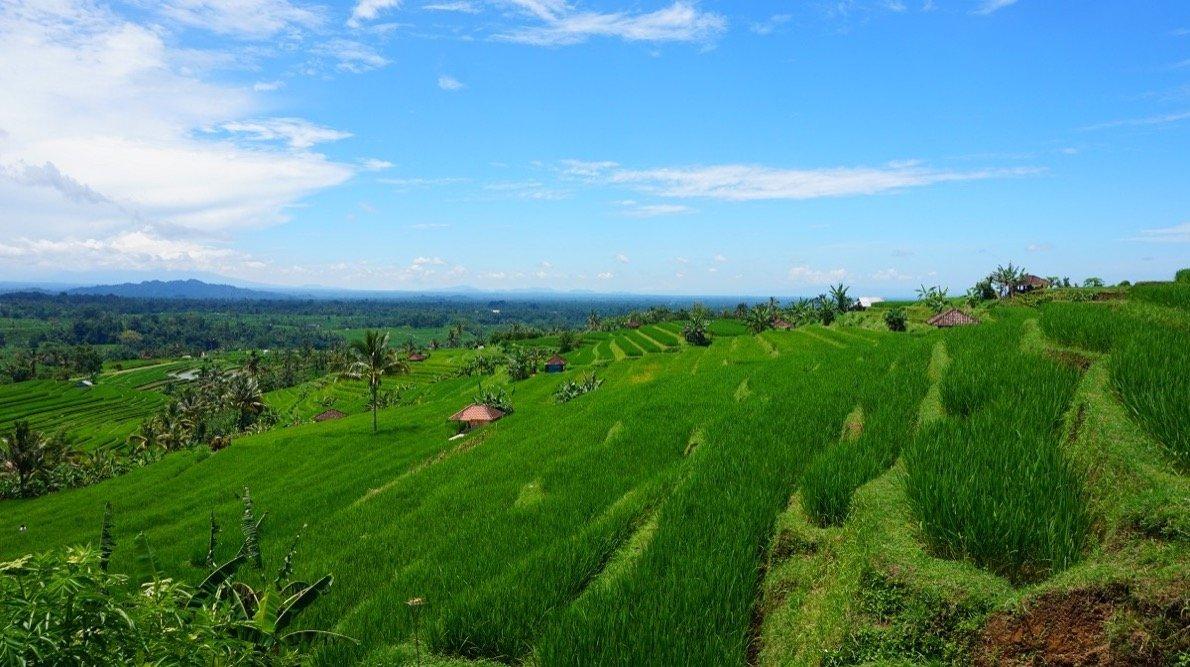 Jatiluwih Reisfelder