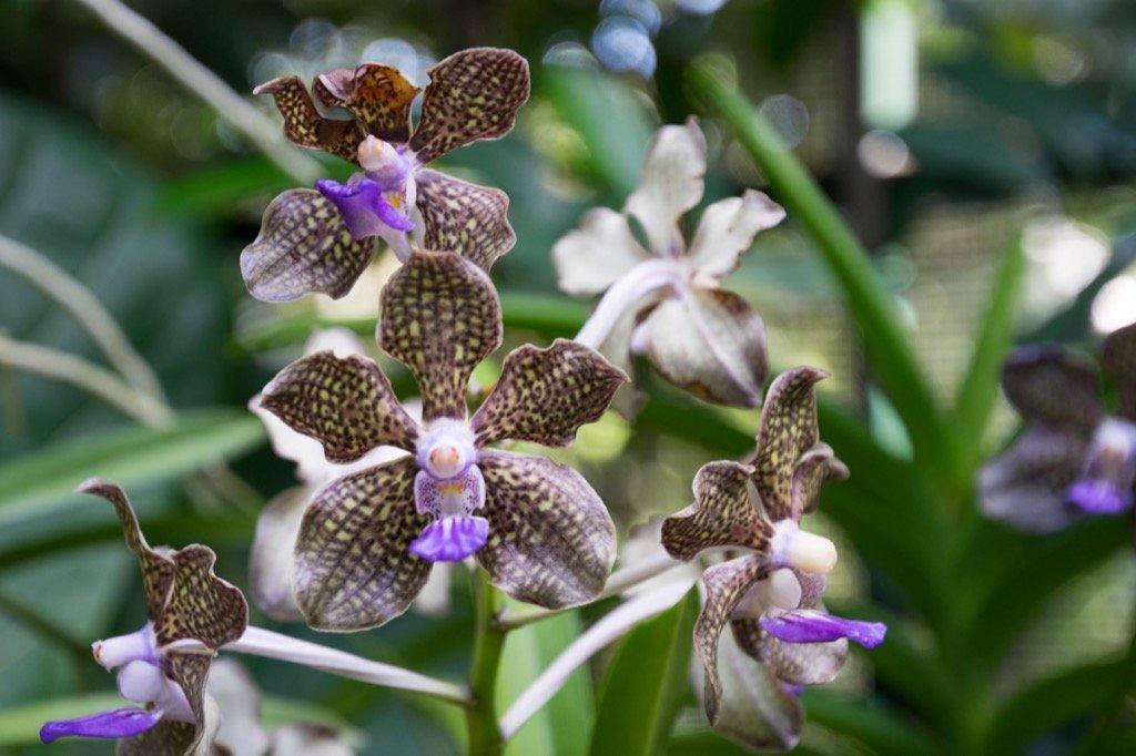 National Orchad Garden Singapur