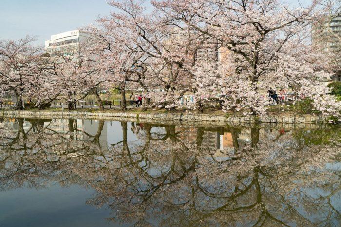 Die beste Reisezeit für Japan: Wann lohnt es sich am meisten?
