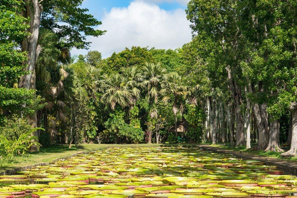 Pamplemousee Botanischer Garten