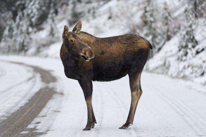 Die schönsten Sehenswürdigkeiten im Jasper Nationalpark