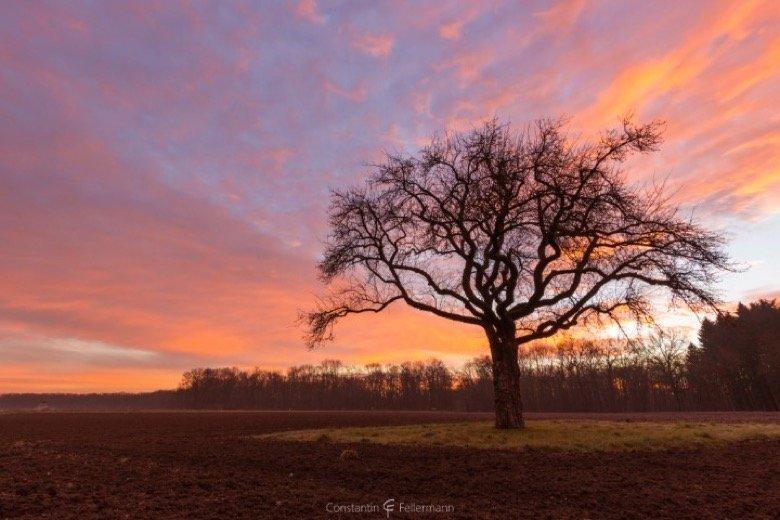 Einsamer Baum bei Elchingen