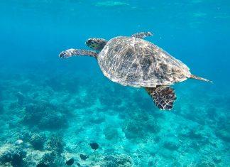 Gili Inseln, Schildkröte