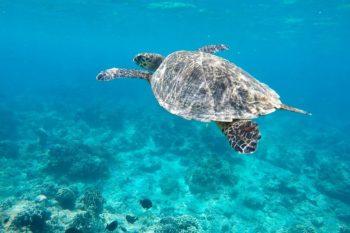 Die schönsten Sehenswürdigkeiten auf Lombok und praktische Tipps für deine Reise