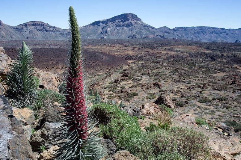 Teide Nationalpark