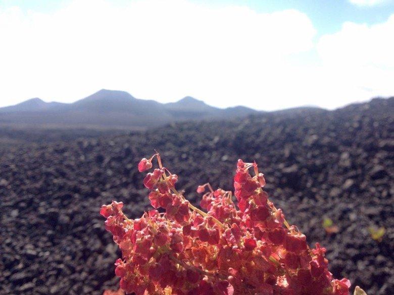 Vulkan Nueces