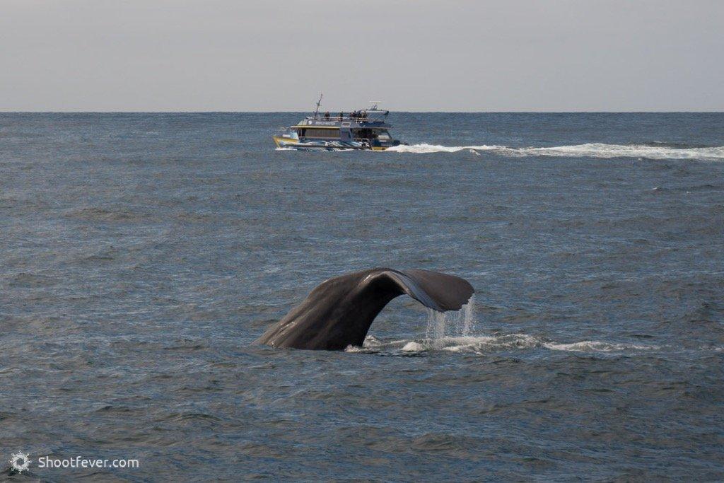 Walbeobachtung Neuseeland