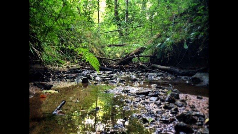 Ehinger Waldsee