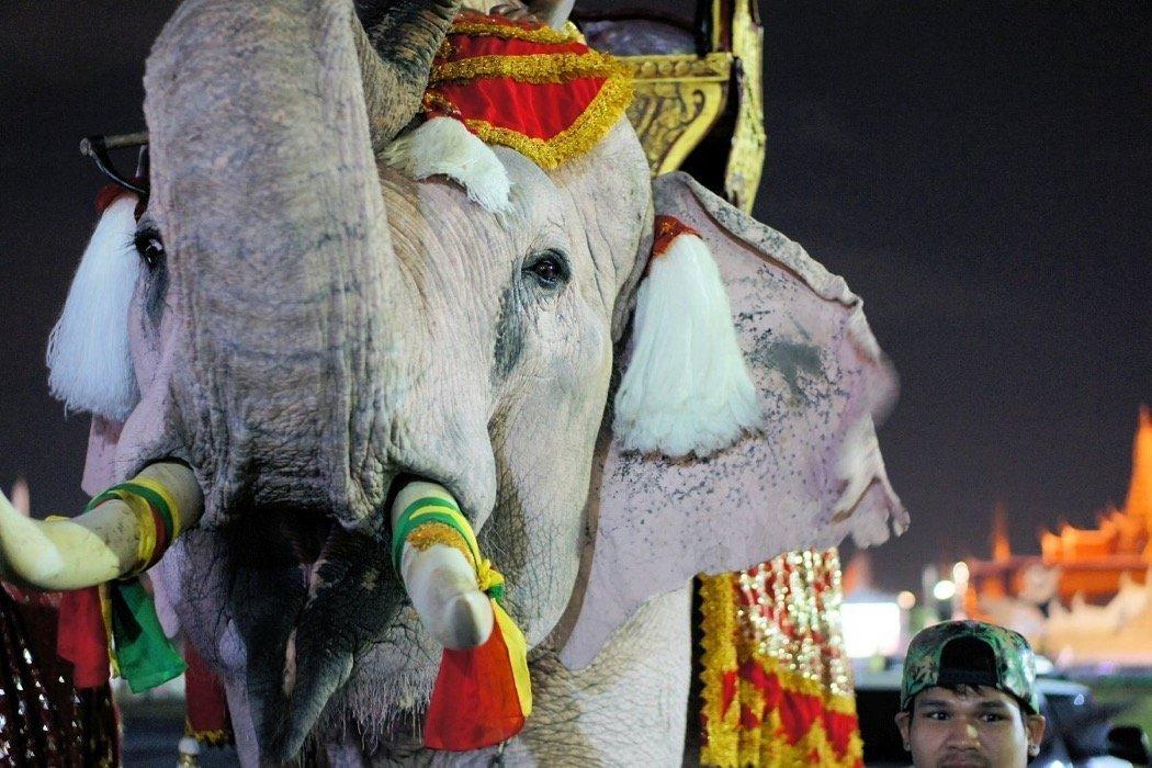 Elefantentag in Bangkok