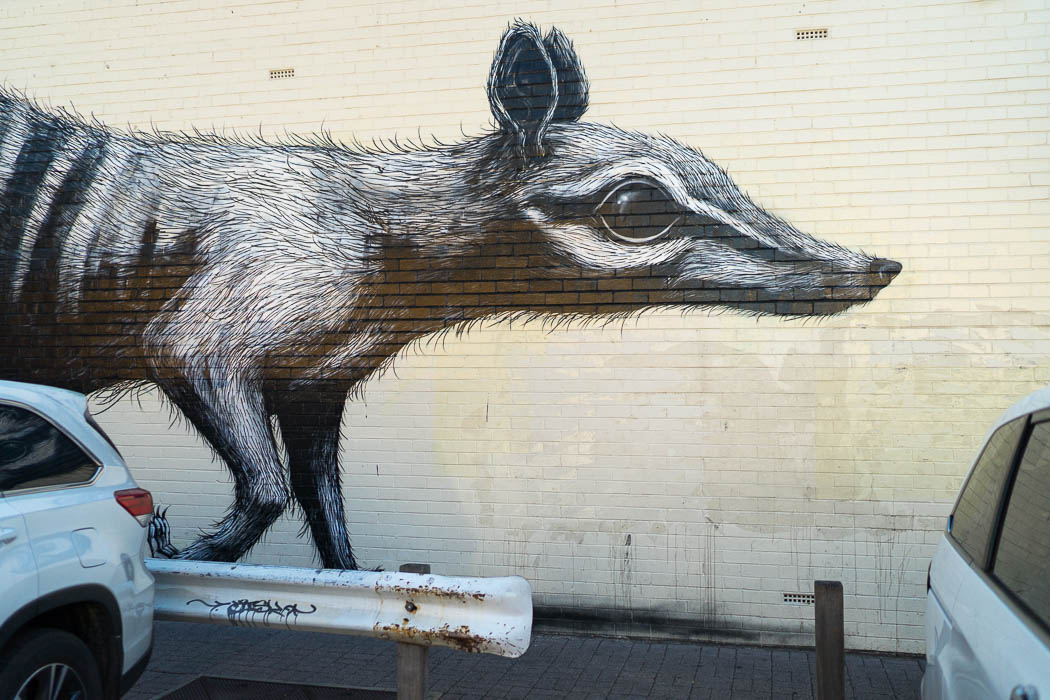 Fremantle Streetart
