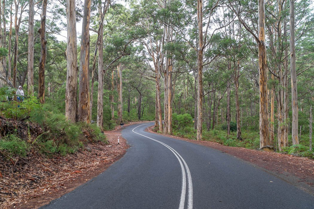 Boranup Forest Viewpoint