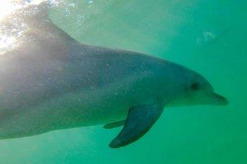 Rockingham: Schwimmen mit Delfinen und eine Insel voller Pinguine