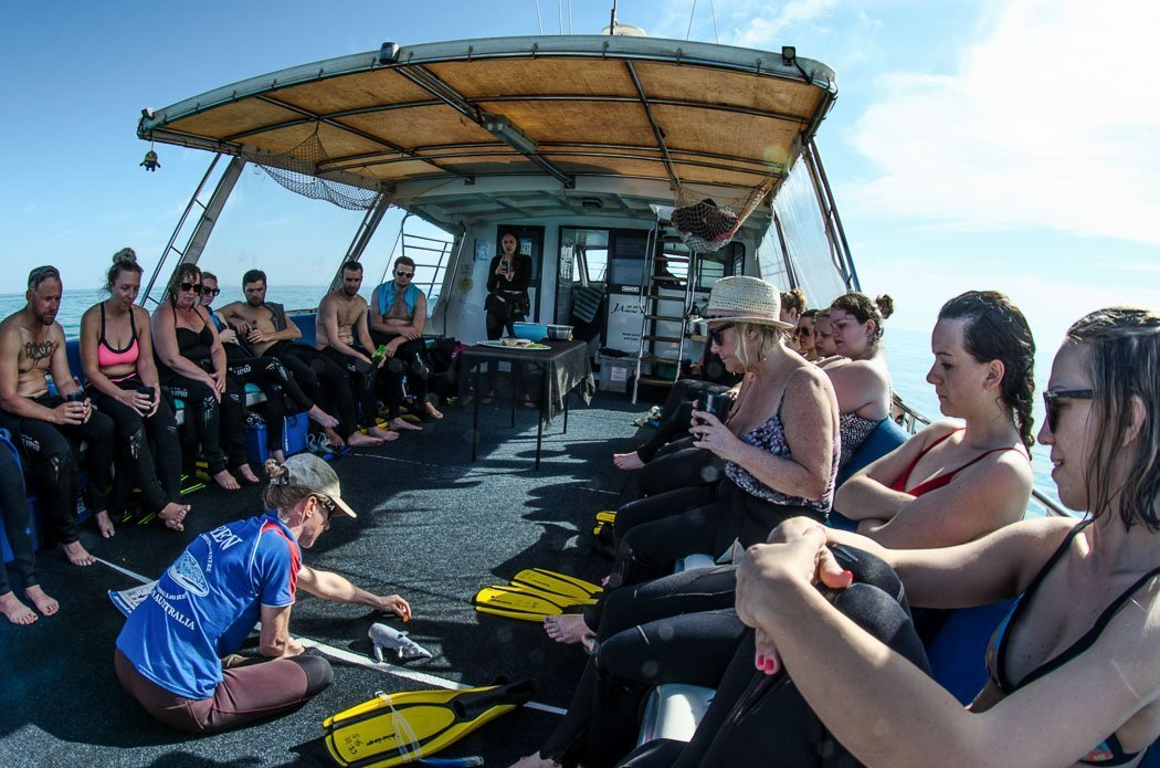 Walhaie Einweisung auf dem Boot