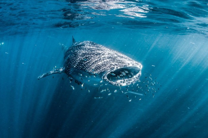 Ningaloo Reef, Walhaie und Traumstrände im Cape Range Nationalpark