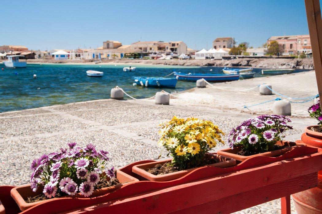 Blumen im Vordergrund mit Hafen im Hintergrund