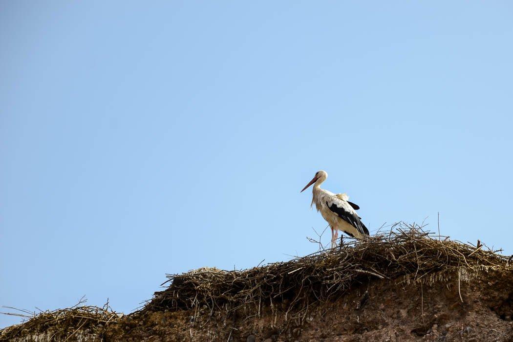 El Badi-Palast Storch