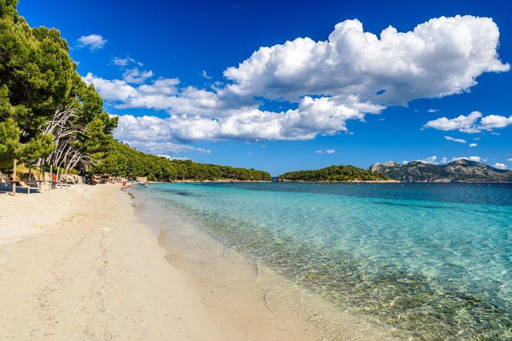 Strand mit Pinienwald
