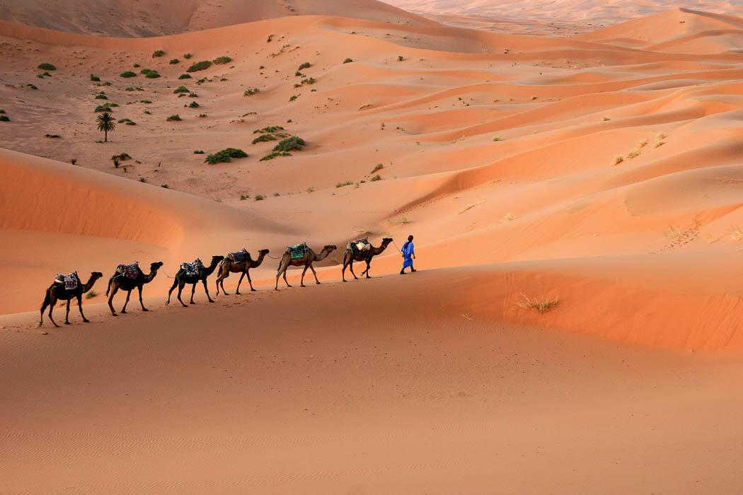Karamelkarawane in der Erg Chebbi Wüste