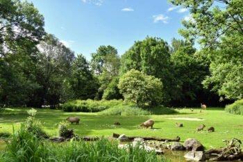 Eine Wiese im Tierpark Hellabrunn, München
