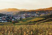Blick über Weinberge in der Pfalz