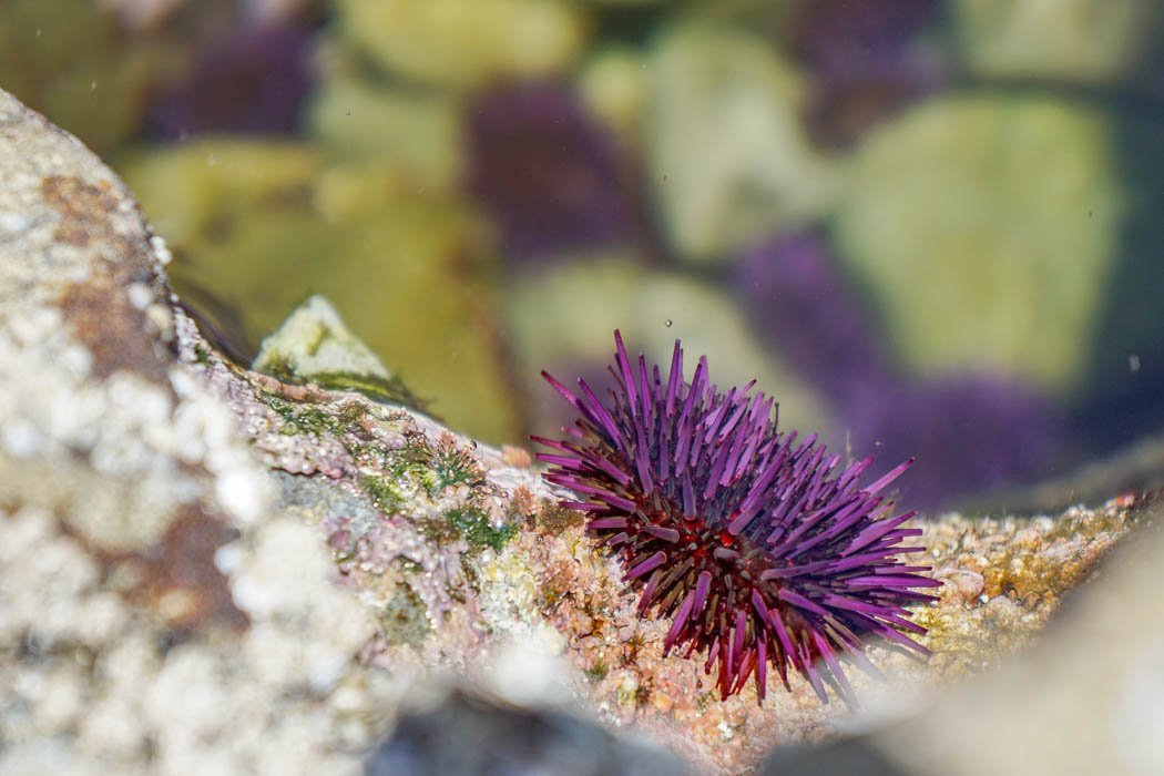 Botanical Beach Vancouver Island