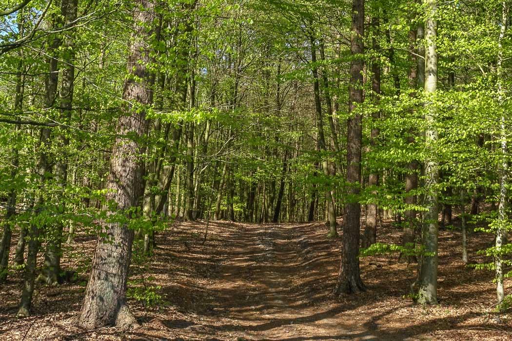 Brekendorfer Forst bei Eckernförde