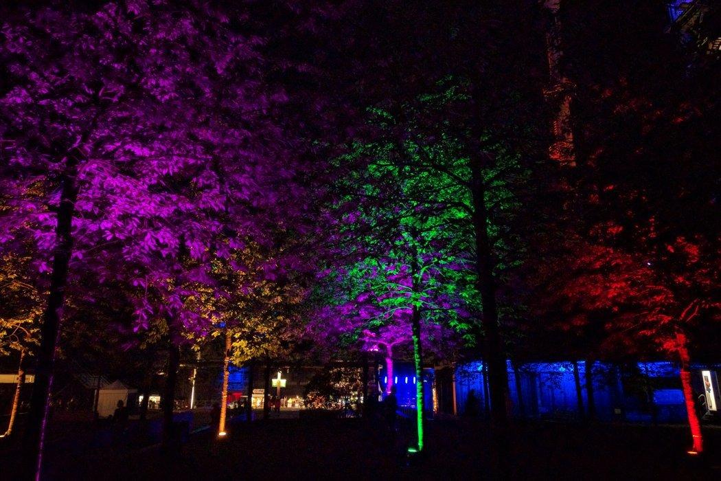 Bunt beleuchtete Bäume bei Nacht
