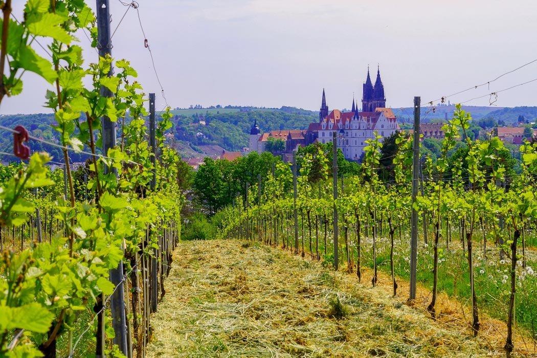Aussicht Schloss Proschwitz