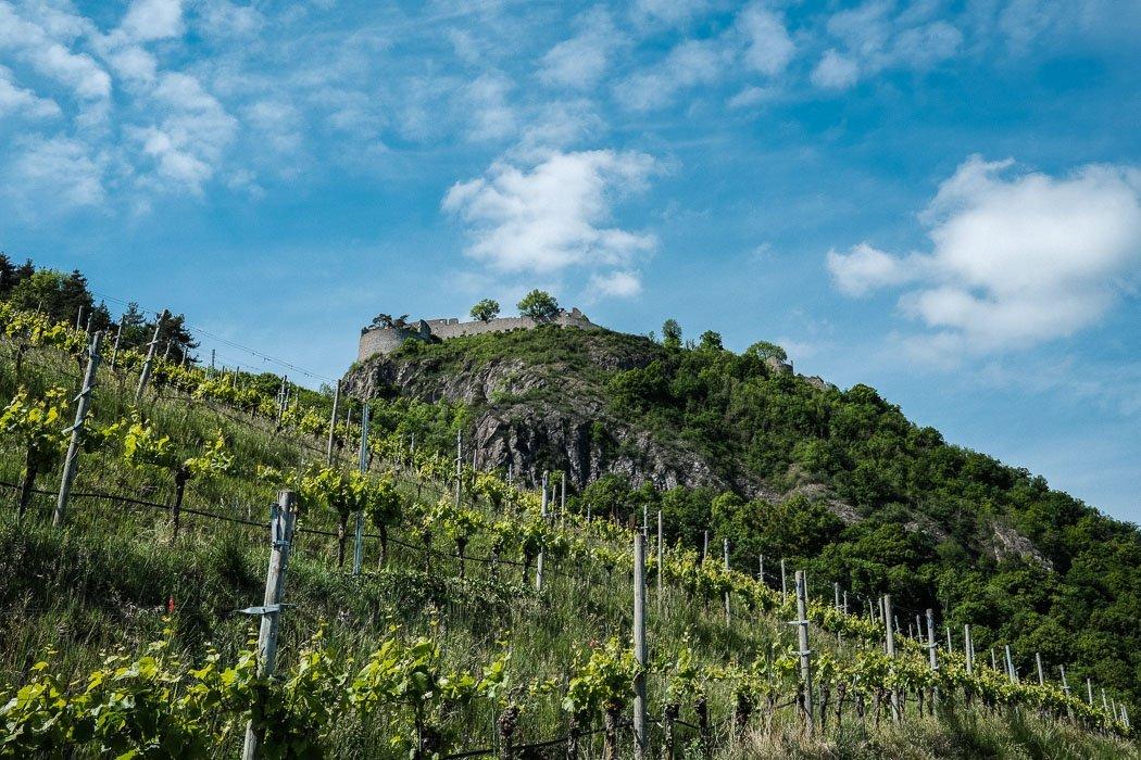 Weinbau Hohentwiel