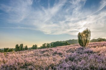 Lüneburger Heide: Die besten Tipps von zwei Einheimischen