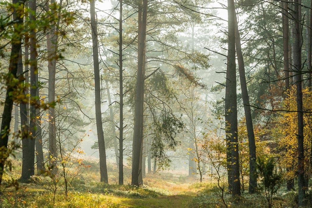 Lüneburger Heide Nadelwald