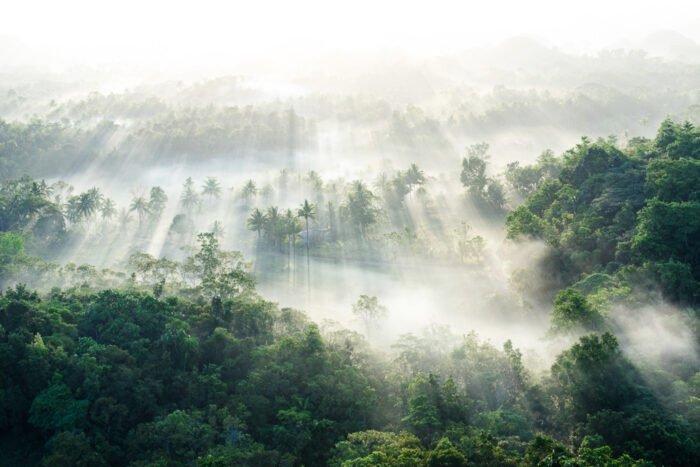 Nebel fotografieren lernen