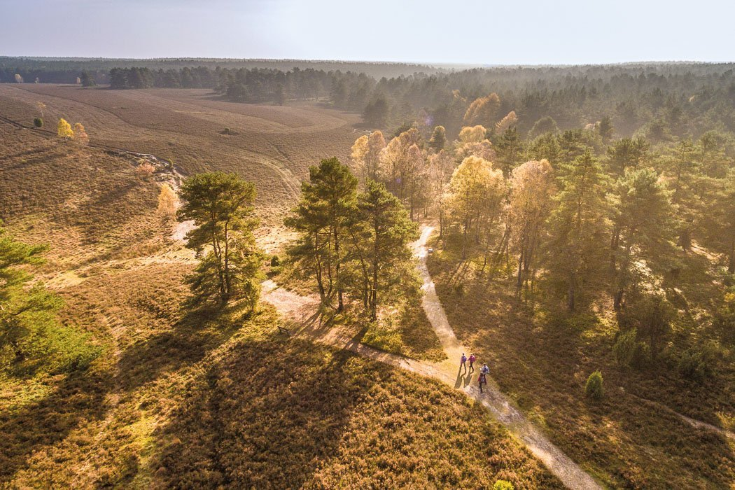 Heideflächen Lüneburger Heide