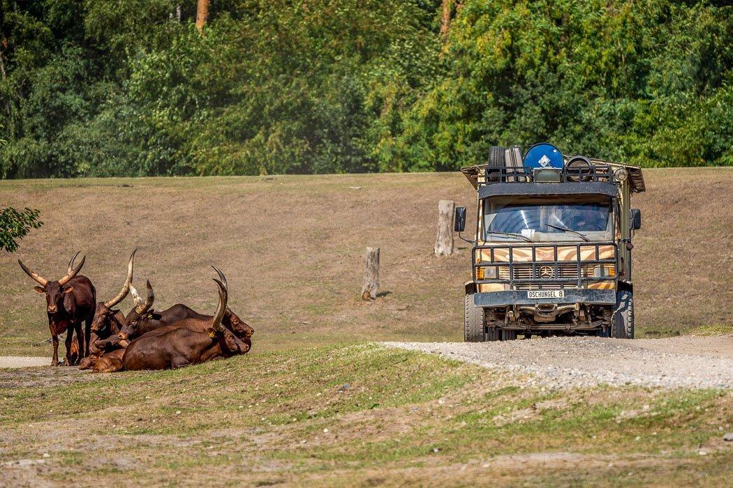 Safari im Serengeti-Park Hodenhagen