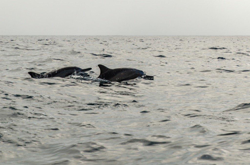 Delfine in Uppuveli